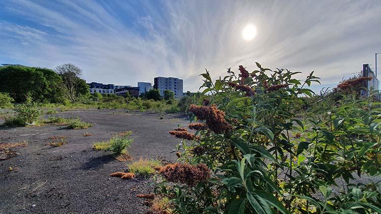 Lockdown Landscape <br srcset=